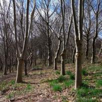 Leddys Woods Winter
